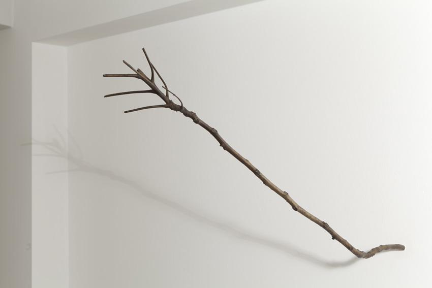 dem kirschbaum ahnelnder essigbaumast (staghorn sumac branch resembling a cherry tree branch)